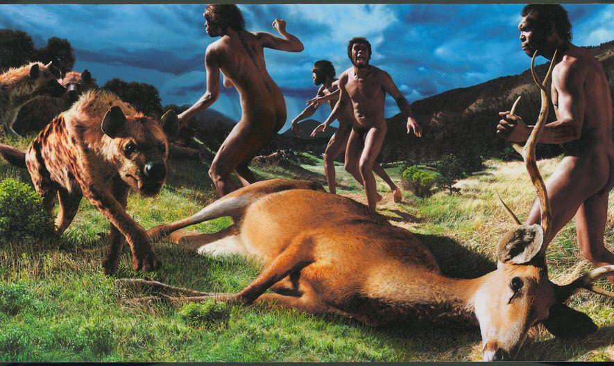 Dieses von Funden aus Dmanissi, Georgien inspirierte Gemälde zeigt einen weiblichen Homo erectus, der Hyänen durch ...