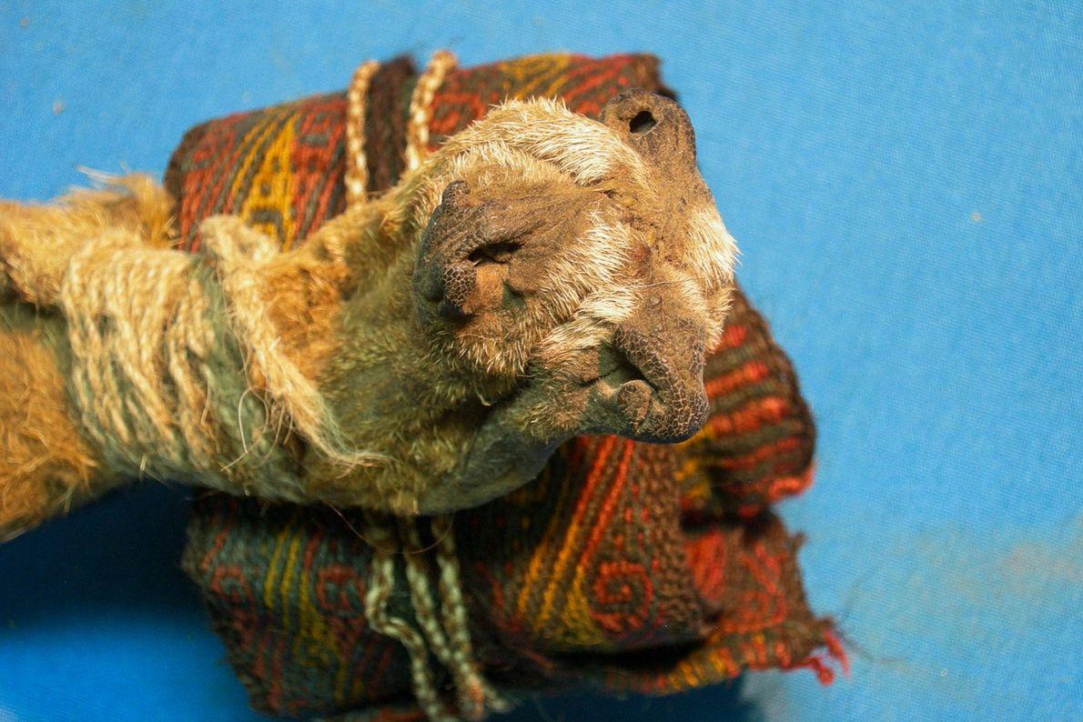 Dieser Beutel besteht aus drei Fuchsschnauzen, die aneinandergenäht wurden. Hier liegt er auf einem bunten Stirnband, ...
