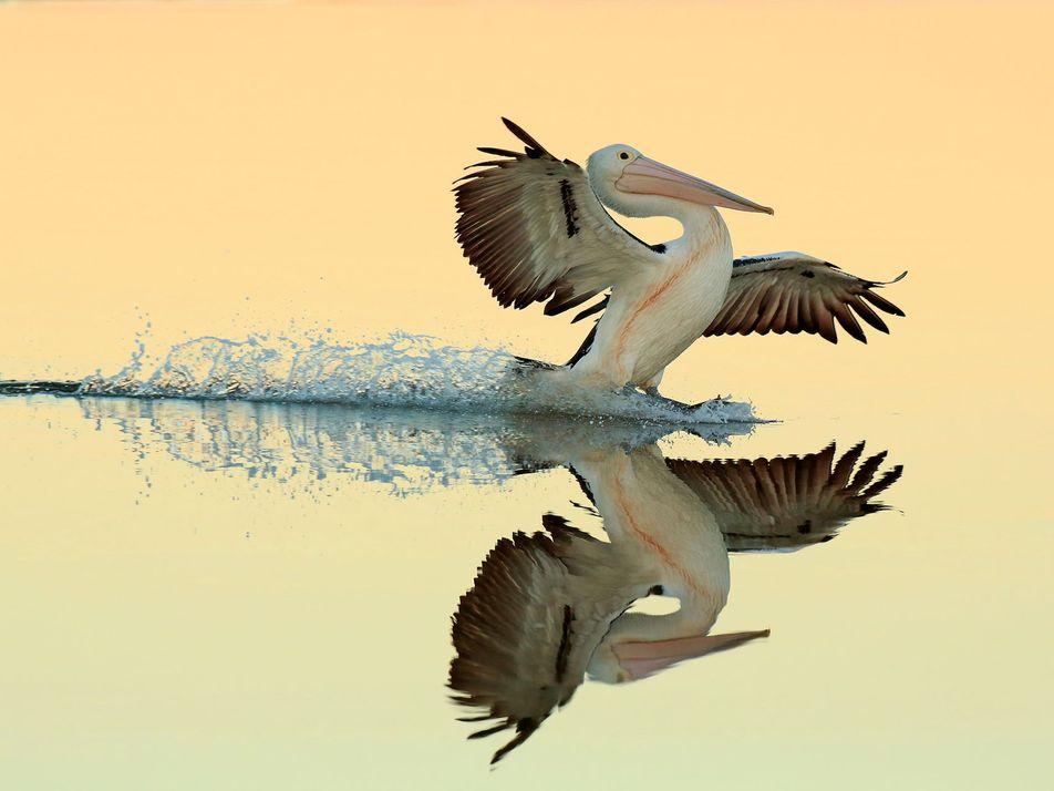 Galerie: 13 dramatische Aufnahmen zeigen die Schönheit und Wildheit von Vögeln