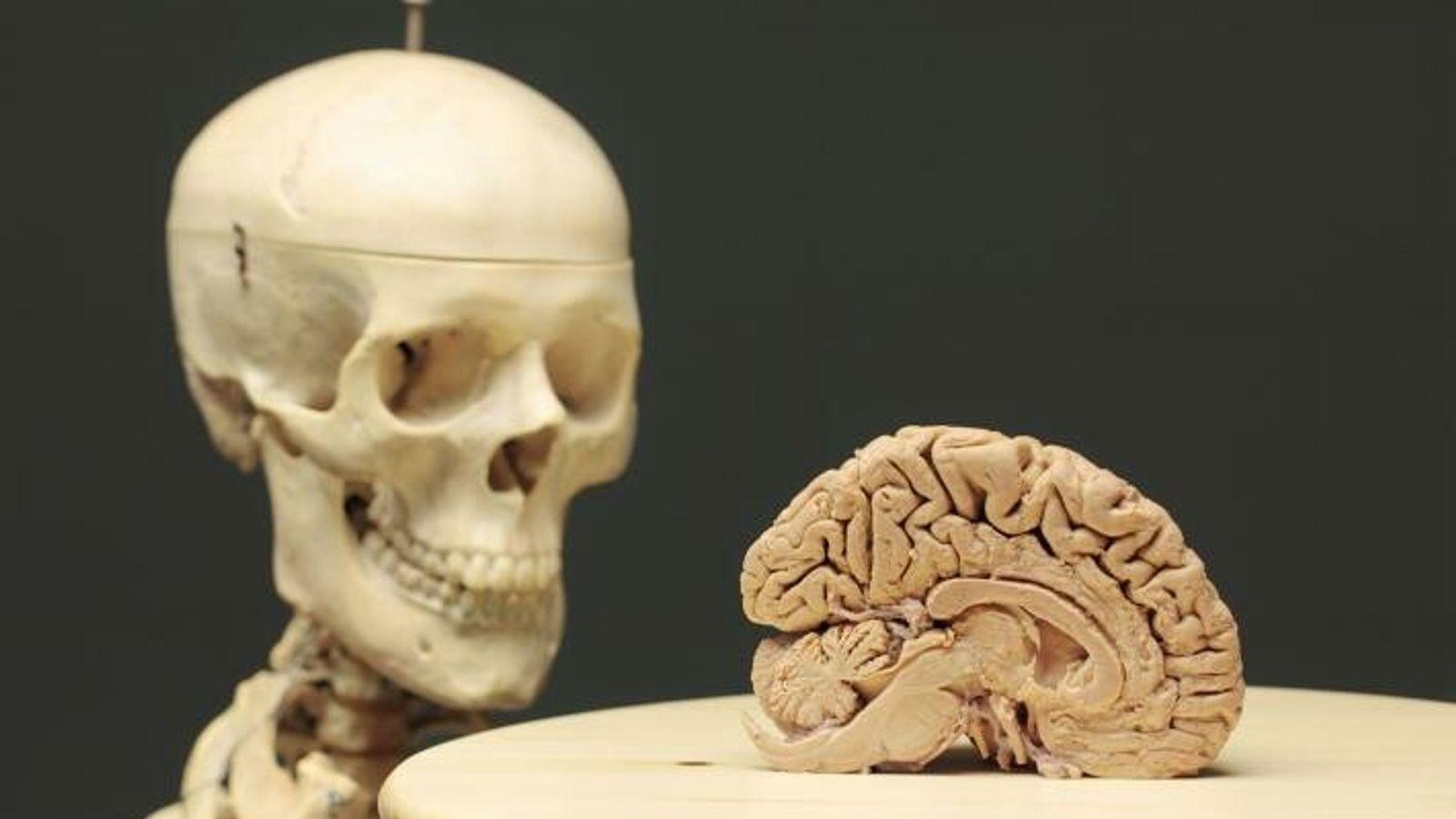 Wenn man das Gehirn als computerähnliches Organ betrachtet, lässt man den Einfluss außer Acht, den unser ...