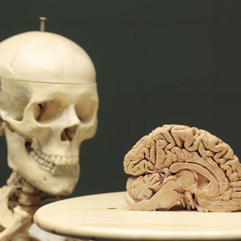 Wie Körper und Umwelt unseren Verstand beeinflussen