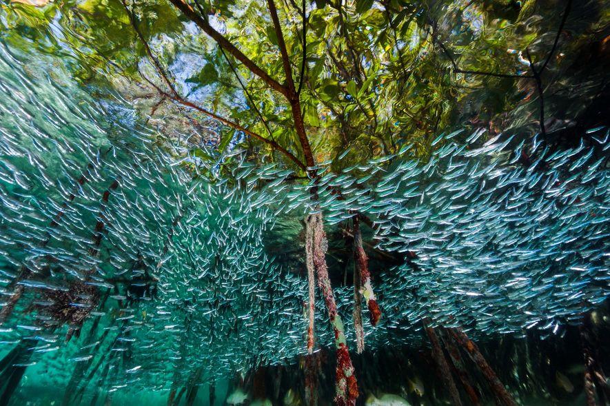 Die verborgene Unterwasserwelt der Tiefsee