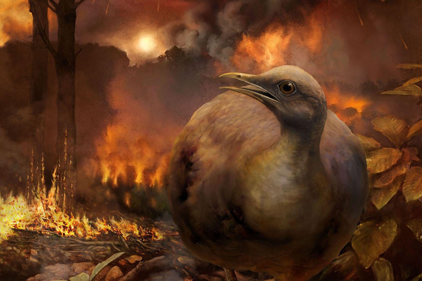 Die Illustration zeigt Vögel eines hypothetischen Stammbaums – mit kleinen, am Boden lebenden Vertretern -, die ...