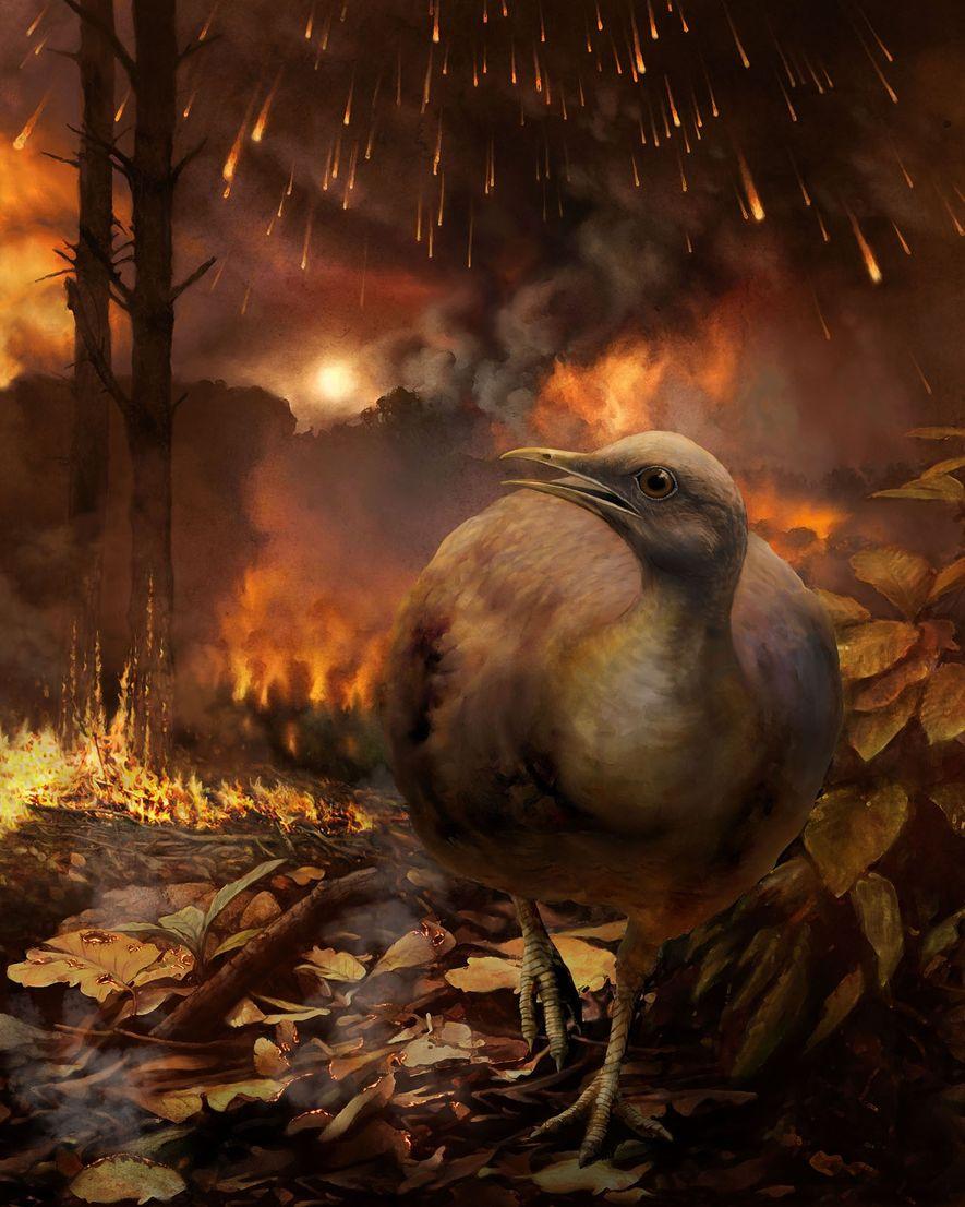 Wie überlebten prähistorische Vögel das Massensterben der Saurier?