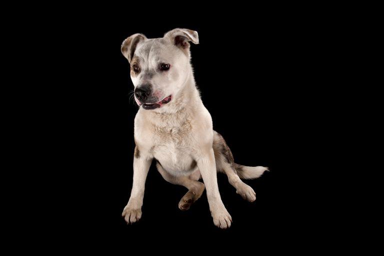 Hundegesten Hunde Verhalten