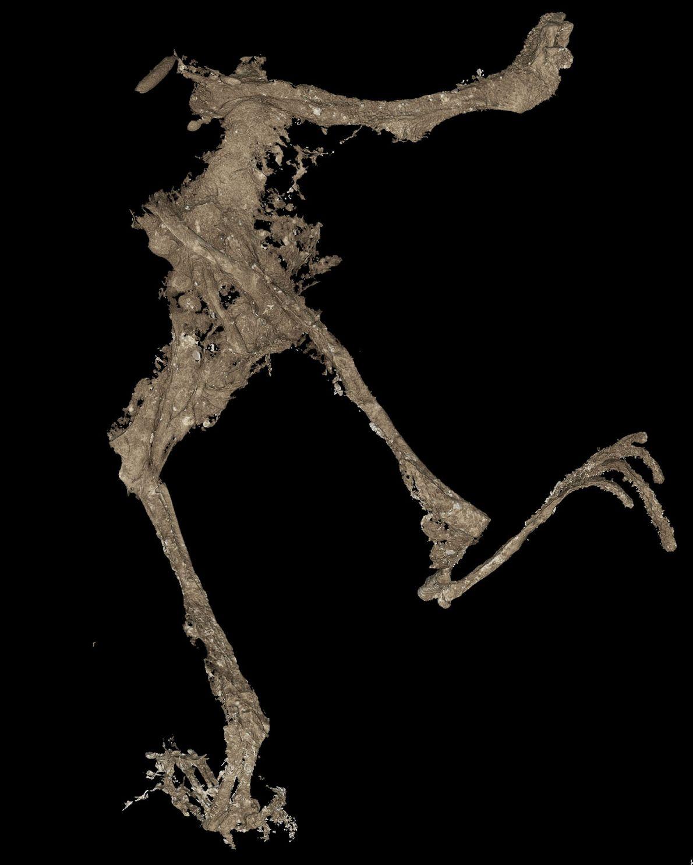 Ein 3D-Scan offenbart Details des Froschkörpers.