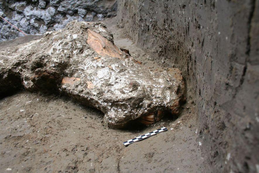 Am Kopf des Pferdes fand man Spuren eines ledernen Gebisses und Zaumzeugs, das mit Metallornamenten verziert ...