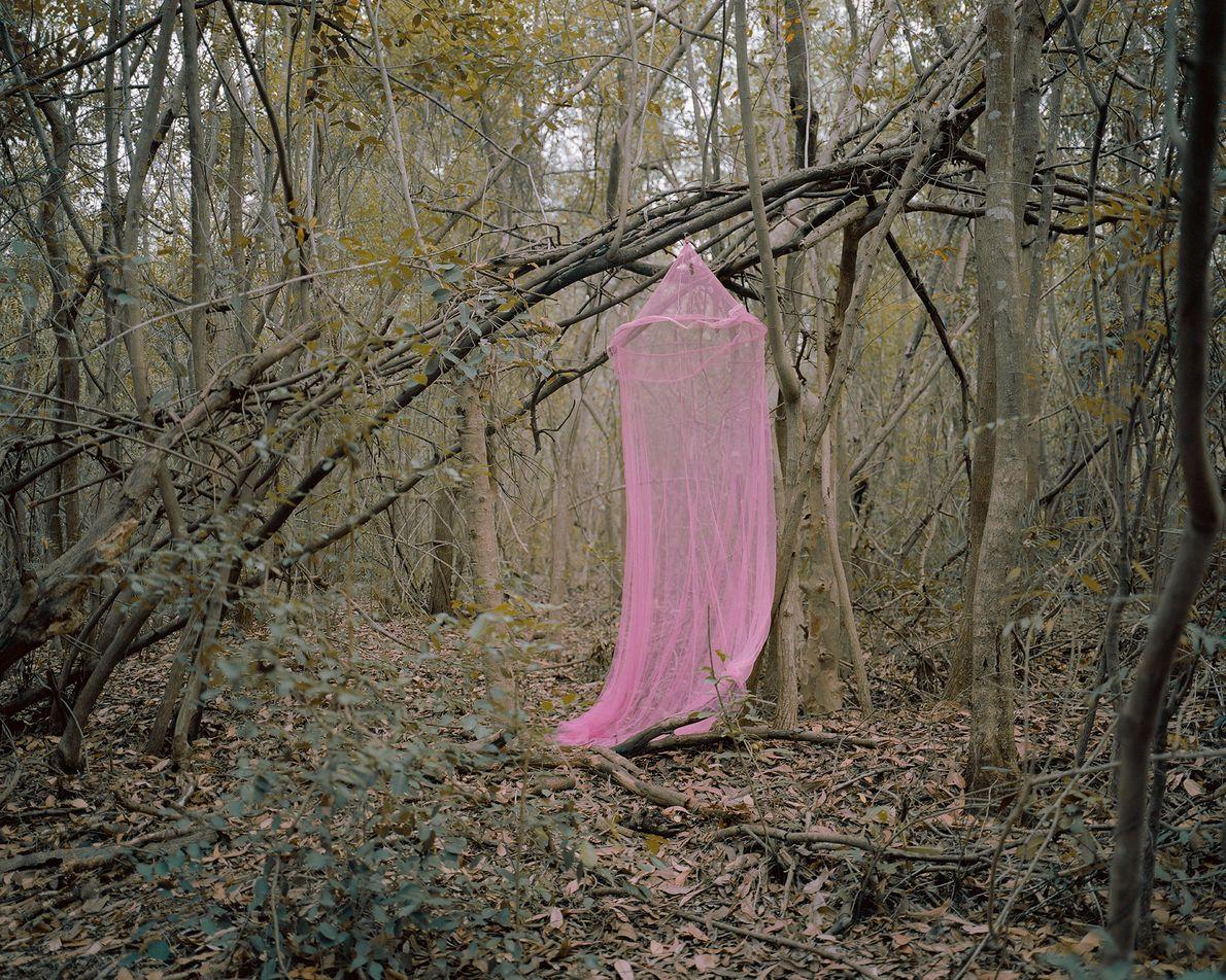 Rosa Moskitonetz im Wald