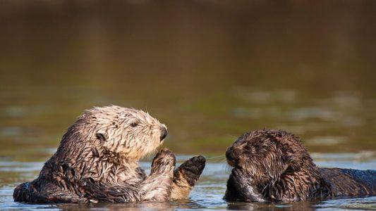 Galerie: Seltenes Otterfossil in mexikanischer Wüste entdeckt