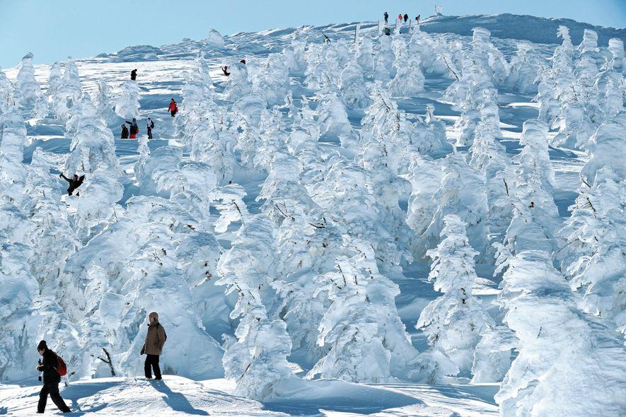 Schneebedeckte Bäume, die als Schneemonster bekannt sind, verwandeln das Skigebiet Zao im Süden Tohokus in ein ...