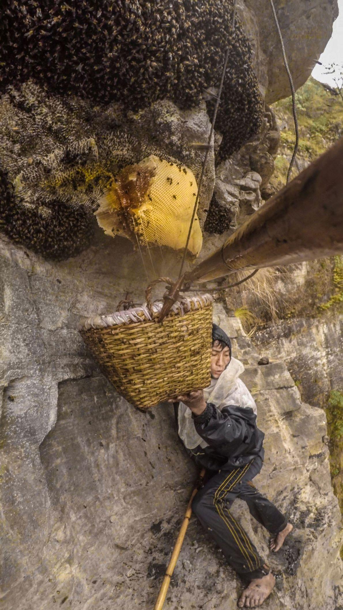 Diese Aufnahme entstand mit einer Kamera, die an einer von Maulis Bambusstangen befestigt war, dem letzten …