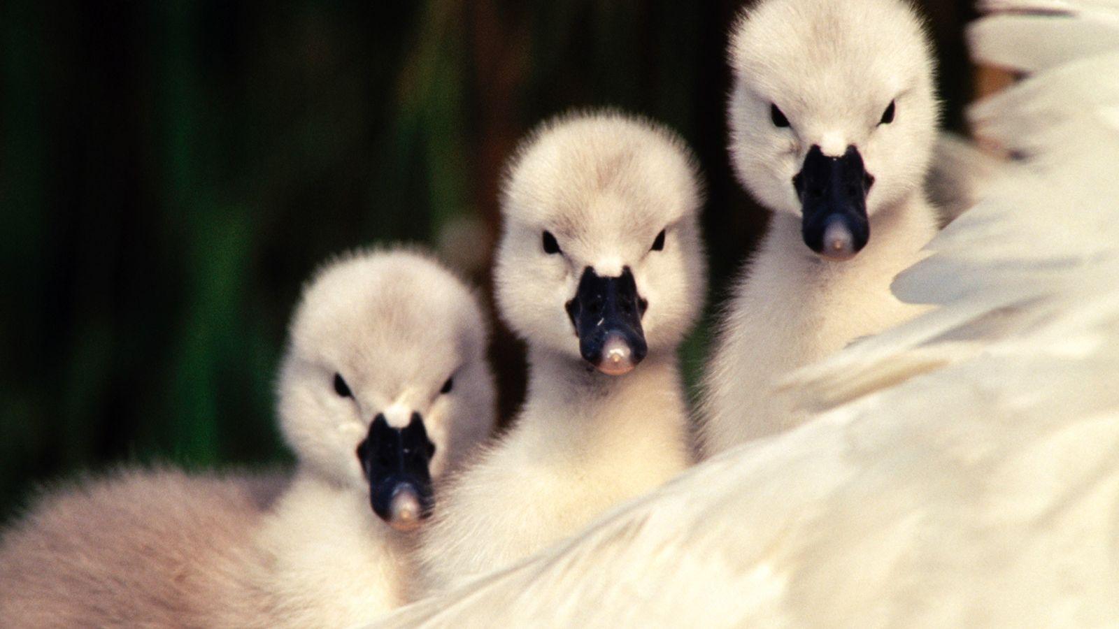 Cute Invaders