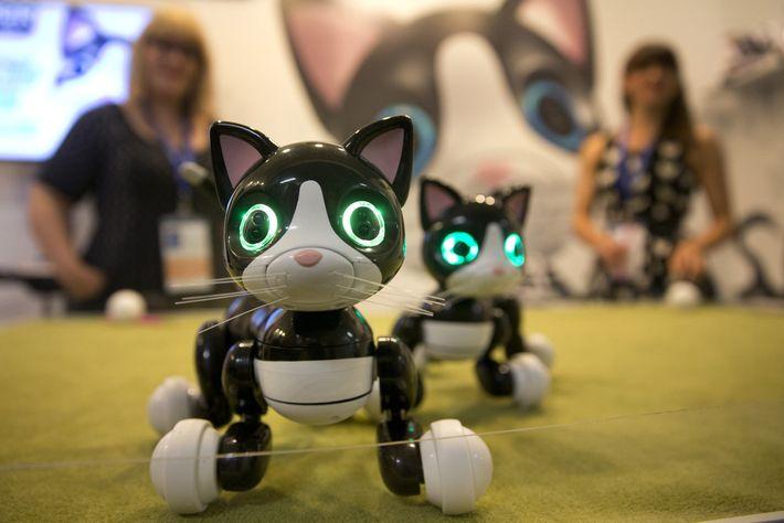 Zoomer Kitties