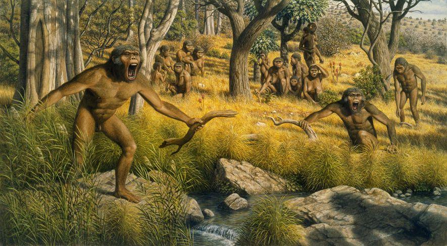Als das Klima in Afrika vor etwa drei Millionen Jahren trockener wurde, wurden Wälder zu Savannen ...