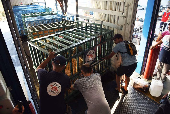 Ein Team aus Tierärzten, Sicherheitsexperten, Regierungsvertretern und Anwälten aus acht Ländern war nötig, um die Rettungsoperation ...