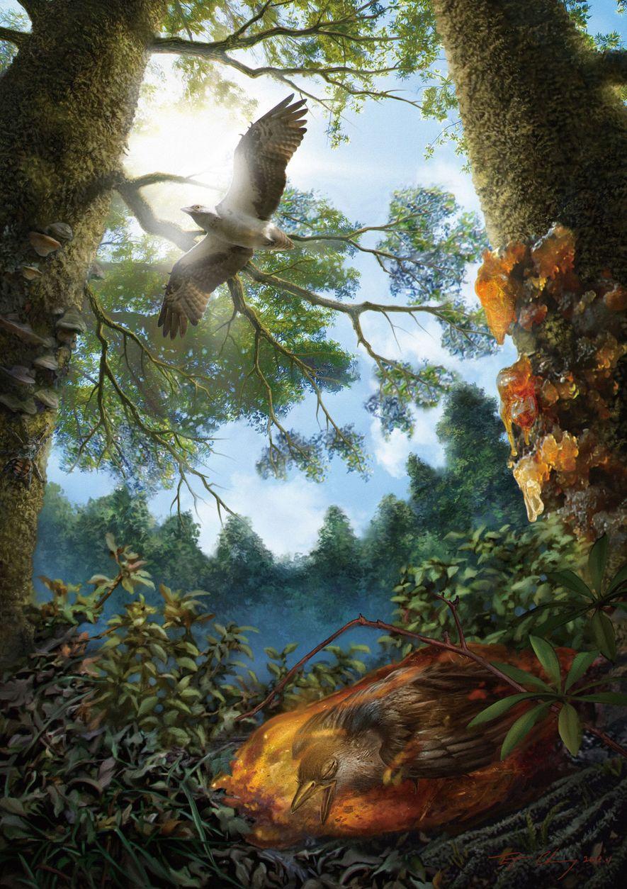 Eine Illustration zeigt den jungen, kreidezeitlichen Vogel gefangen im Baumharz, das letztendlich zu Bernstein versteinert ist.