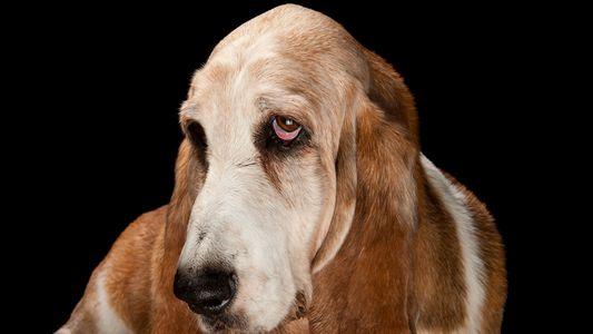 Galerie: Würden eure Haustiere euch nach eurem Tod fressen?