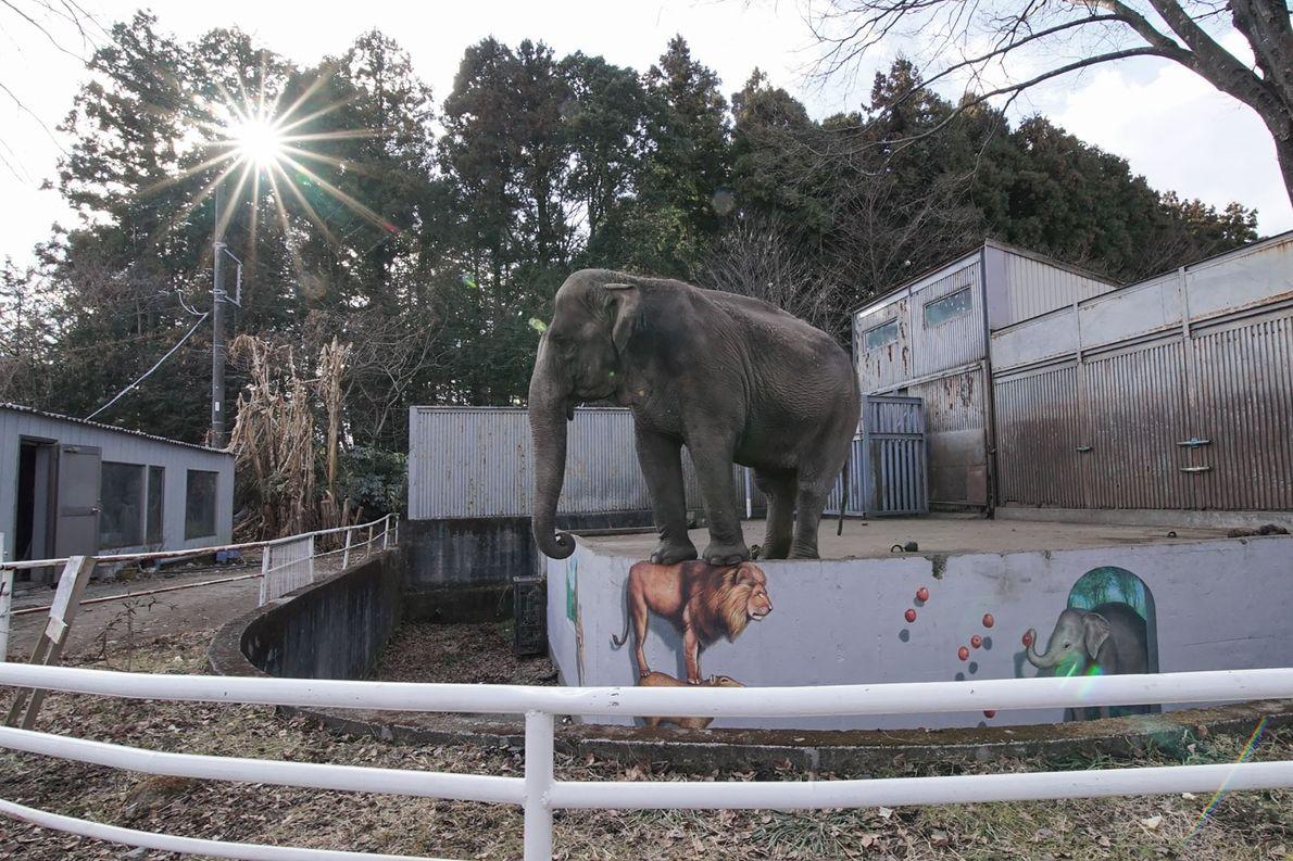 Miyako ist schon ganze 44 Jahre allein in ihrem Gehege im Utsunomiya Zoo.