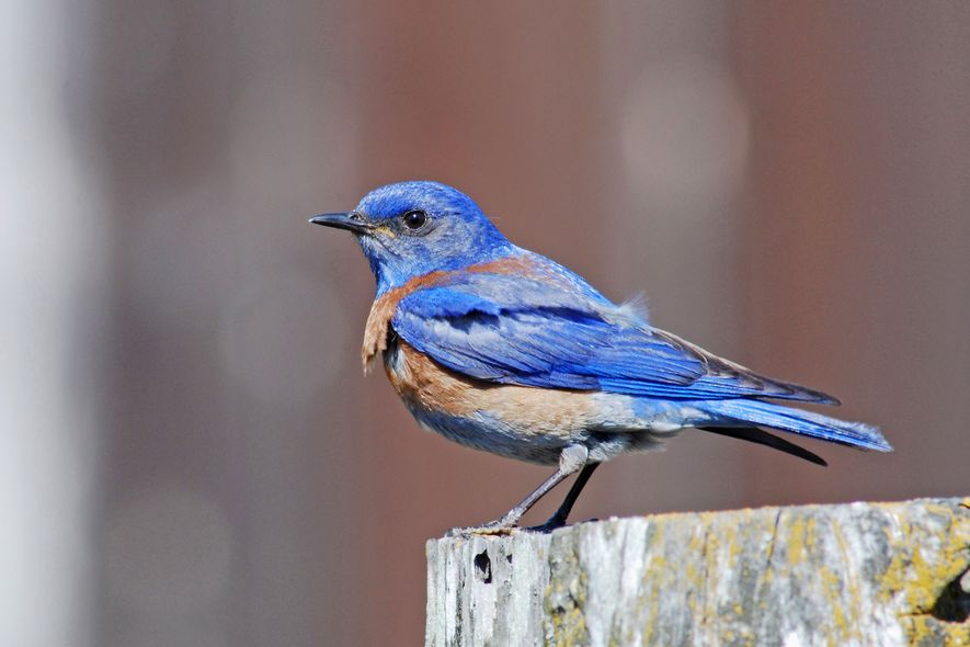 Öl- und Gasbohrungen sorgen für weniger Vogelnachwuchs