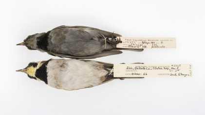 Galerie: Schwarze Vögel durch Luftverschmutzung – eine Lektion für die Gegenwart