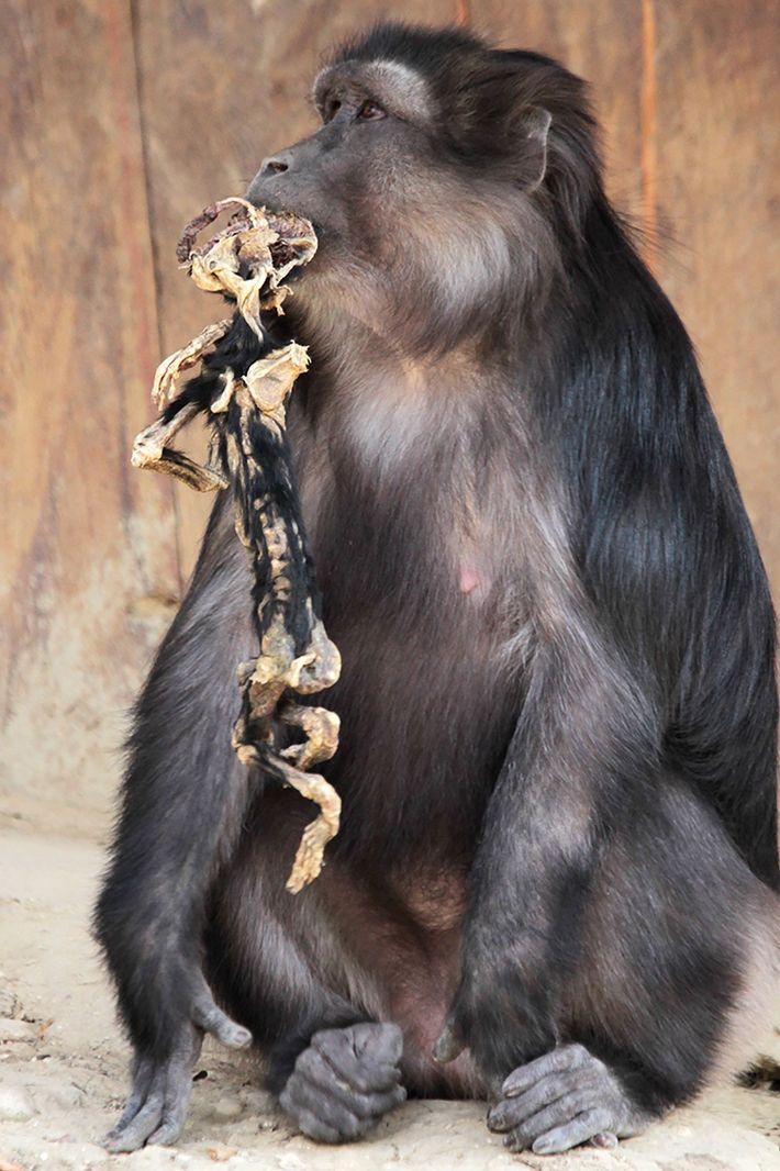 Mutter mit Skelett im Maul