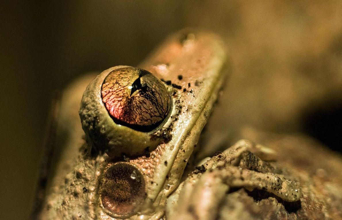 Frosch. Pinellas Park, Florida, USA