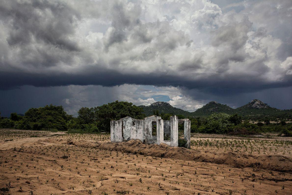 Der Mais wächst nur spärlich auf diesem abgetragenen Feld im Umkreis eines zerstörten Bauernhauses. Die staatlich ...