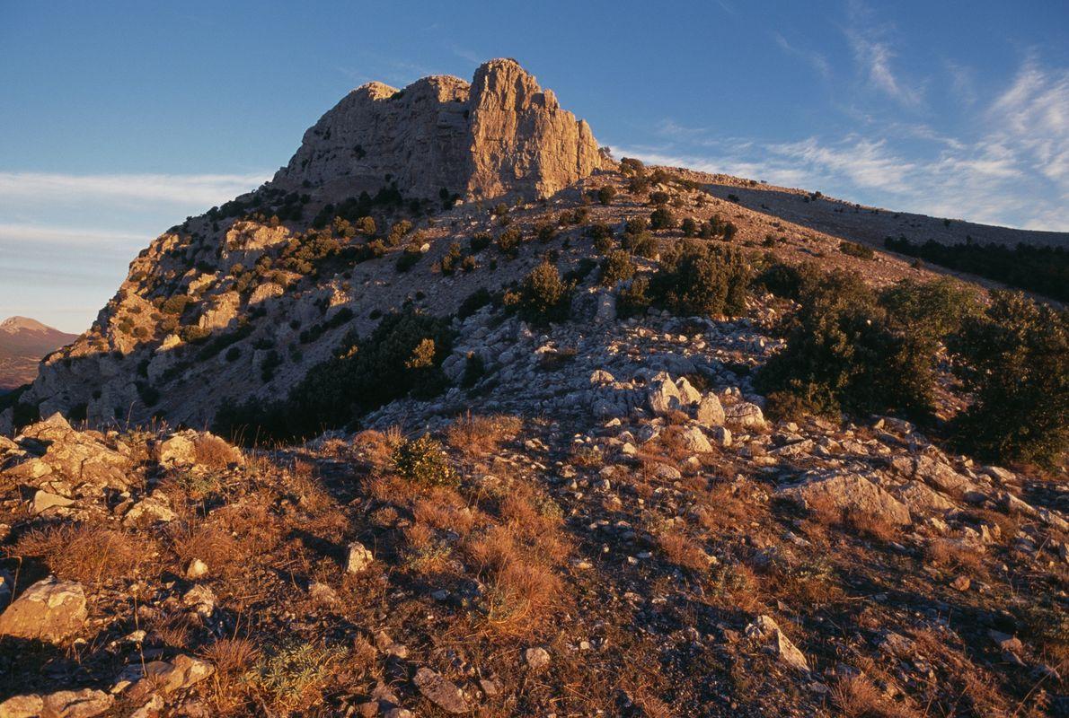 """In den abgelegenen hohen Berggipfeln im Nationalpark Pollino überdauerte die Kiefer """"Italus"""" mehr als ein Jahrtausend."""