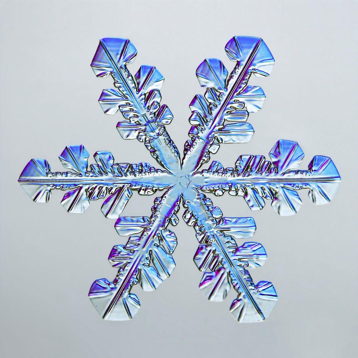 Die zahlreichen Facetten dieser sechsarmigen Schneeflocke leuchten blau und lila – dank der Arbeit des Fotografen ...