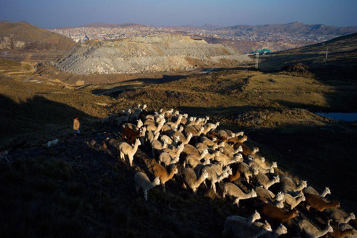 Hirte vor Cerro de Pasco