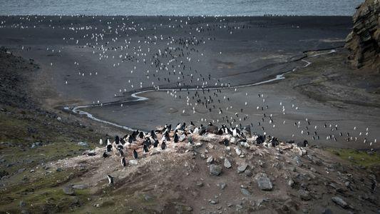 Galerie: Bilder aus 100 Jahren Geschichte einer antarktischen Vulkaninsel 1