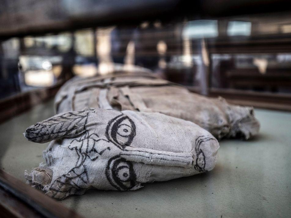 Galerie: Seltene Löwenmumien in Ägypten gefunden