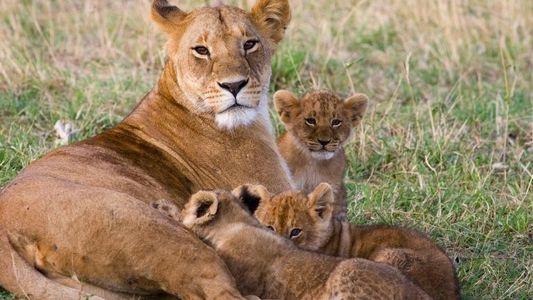 30 berührende Momente zwischen Tiermüttern und ihrem Nachwuchs