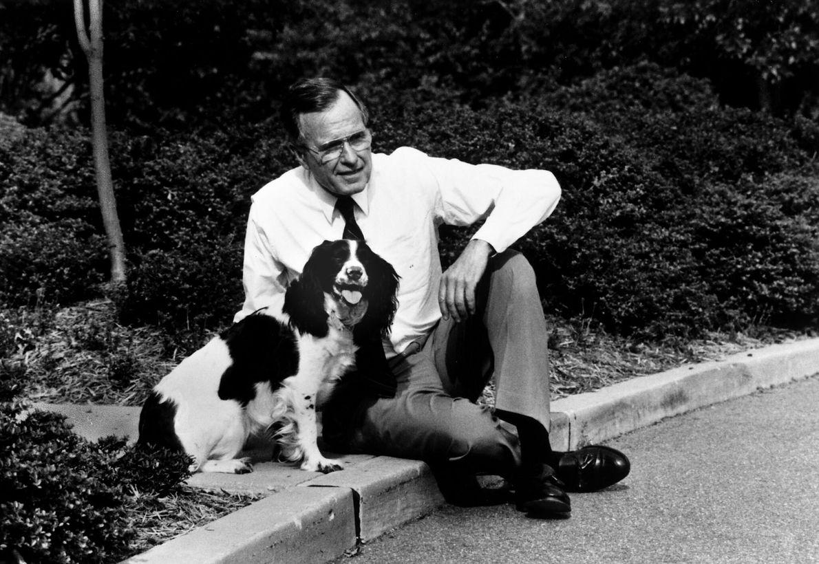 Präsident George H.W. Bush & Springer Spaniel Millie