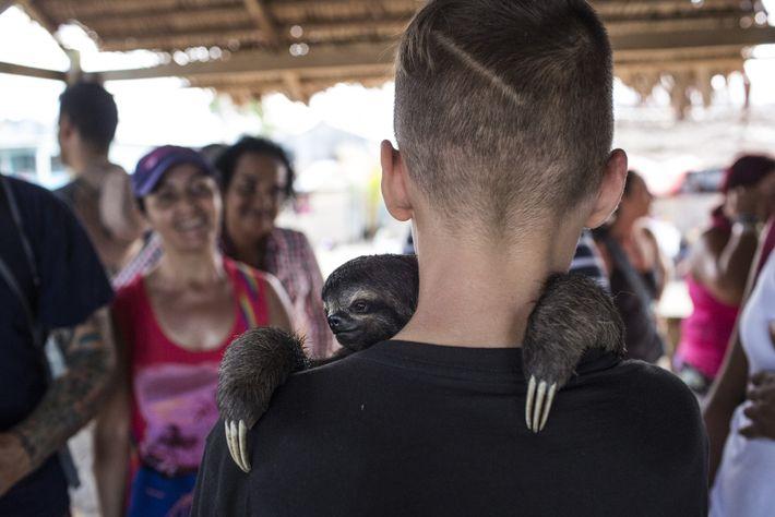 Ein Junge in Puerto Alegria in Peru kuschelt mit einem jungen Faultier. In der kleinen Stadt ...