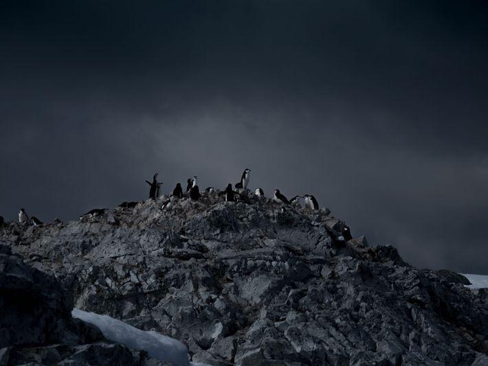 Eigentlich sollten Pinguine eines der Hauptmotive bei Skovranovas Antarktisreise werden, aber am Ende kam es dann ...