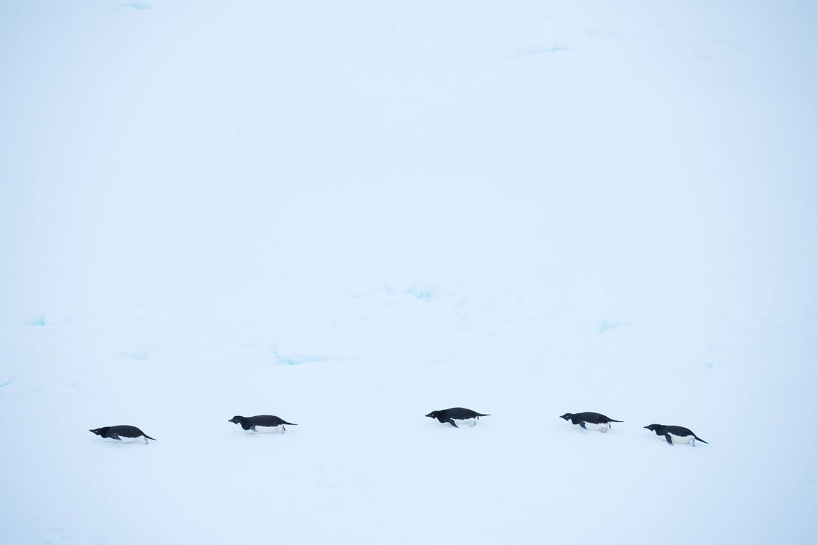 Die Antarktis ist ein rauer und unerbittlicher Lebensraum.