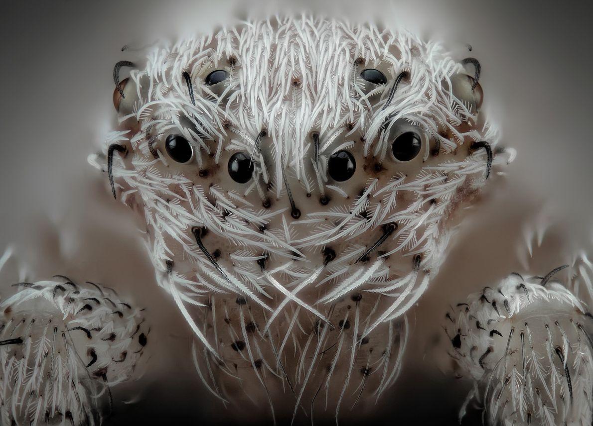 Der spanische Fotograf Javier Rupérez ist auf extreme Makroaufnahmen spezialisiert. Er machte diese ausdrucksstarke Nahaufnahme einer ...