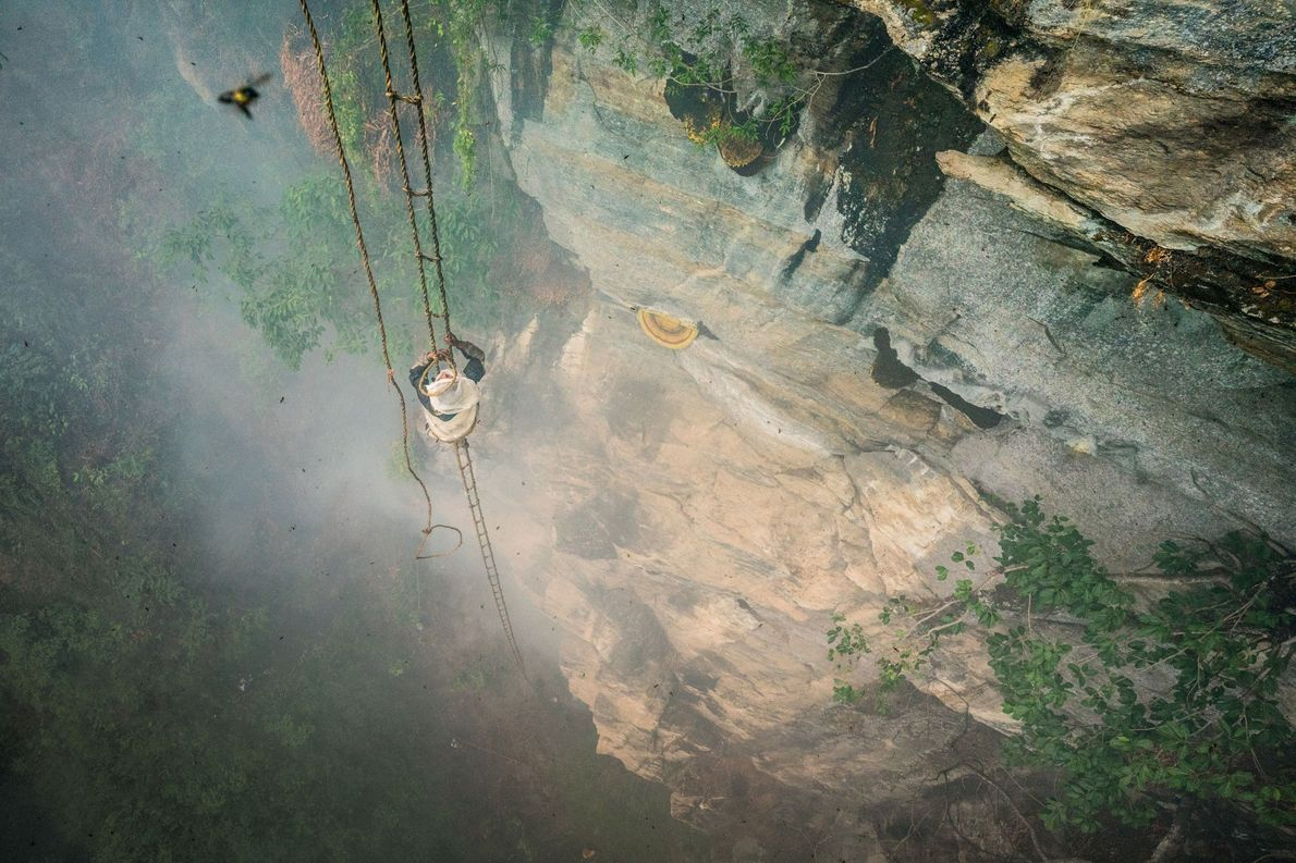Mauli Dhan klettert 30 Meter auf einer Strickleiter aus Bambusseil hinauf, um sein Ziel zu erreichen: …