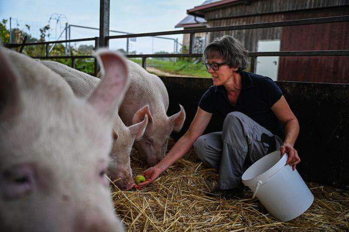 Evi Heigl füttert ihre Schweine. Auf ihrem Biohof gibt es 90 Sauen und etwa 500 Ferkel.