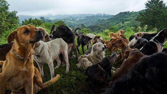 Hunde ruhen sich aus