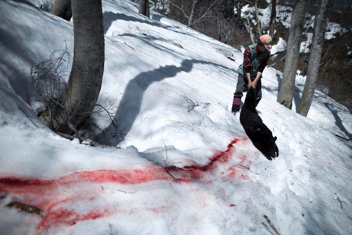 Blutspur im Schnee