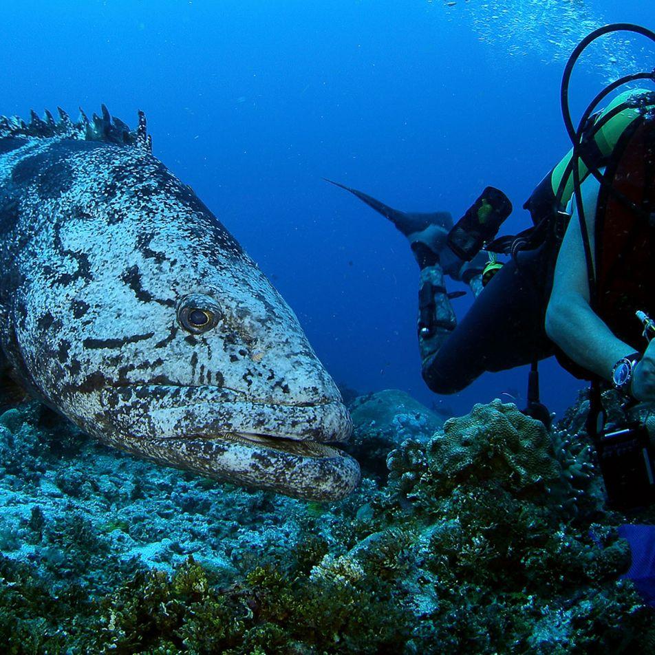 Seychellen kündigen Meeresschutzgebiet von Größe Großbritanniens an