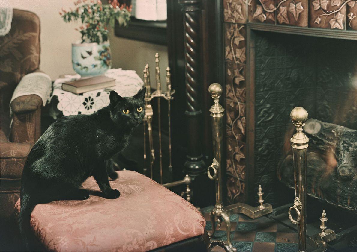 Eine schwarze Hauskatze