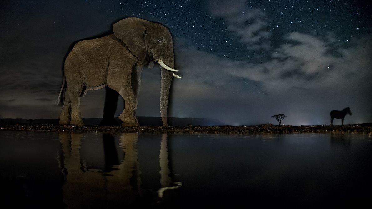 Elefant und Zebra im Zimanga Game Reserve