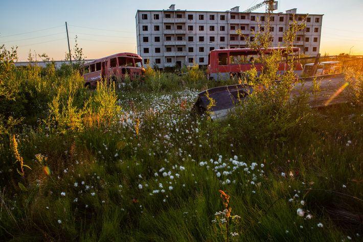 Riesen-Steppenkerzen, Weidenröschen und Wollgräser sind im russischen Tscherski im Sommer allgegenwärtig. Die ganze Stadt wurde auf ...