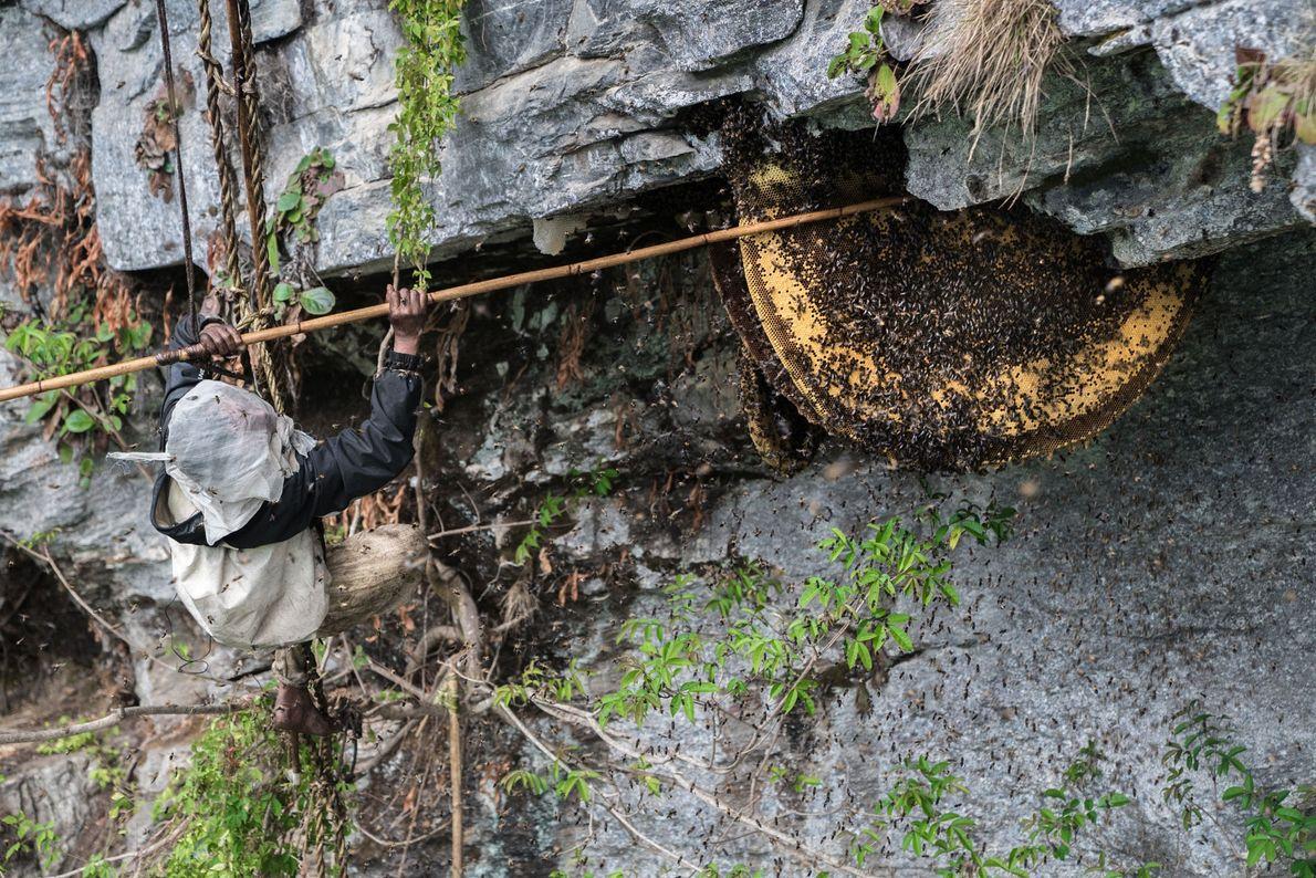 Honigernte in Nepal