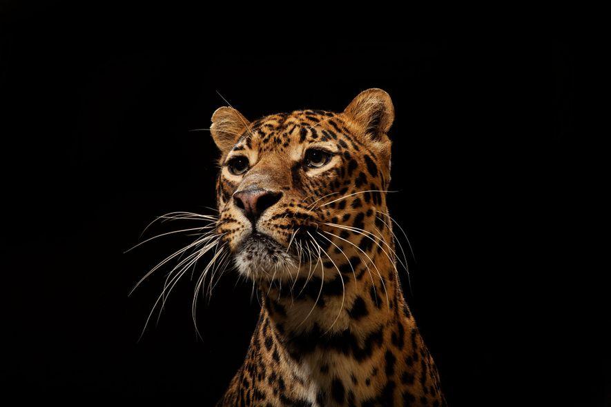 Unsere beeindruckendsten Bilder von Raubkatzen
