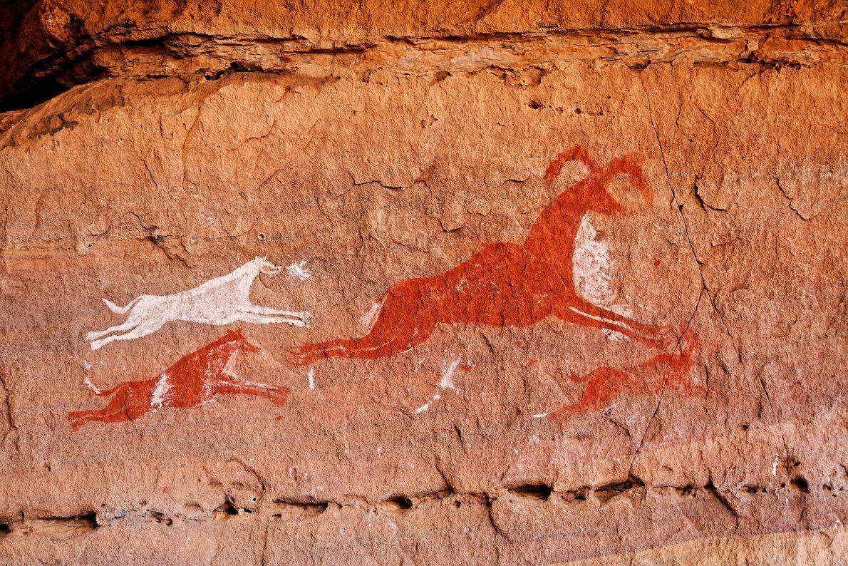 Dieses 12.000 Jahre alte Felsbildkunstwerk aus dem lybischen Gebirge Tadrart Acacus zeigt ein Rudel flinker Hunde ...