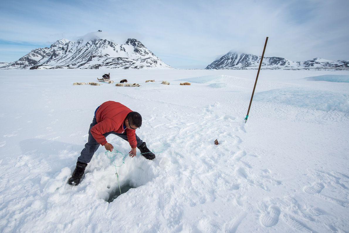 Ein Inuit im Osten Grönlands auf der Jagd. Die Kultur der Inuit ist für die Nahrungsversorgung ...